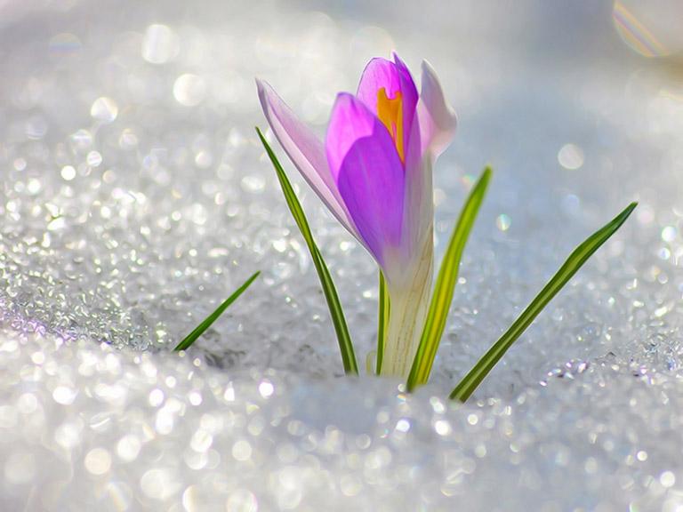 Акция «Весенний подарок»