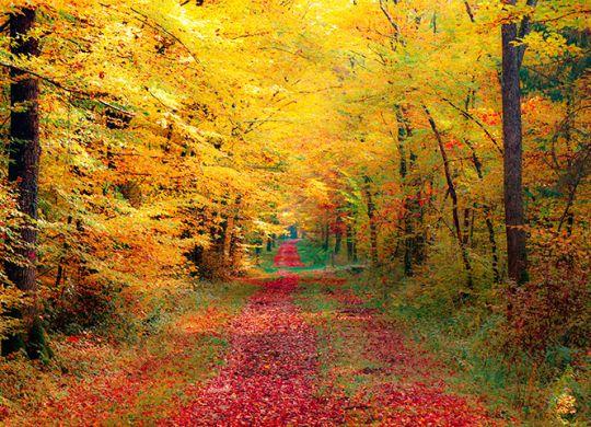 Осенние скидки − акция «Золотая осень»